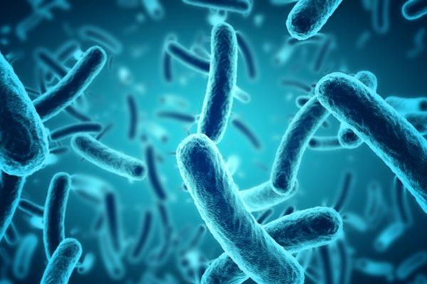 bacteriaseptic 1